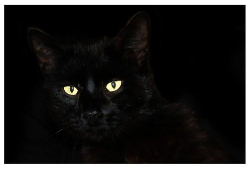 Čierne ženy sania mačička