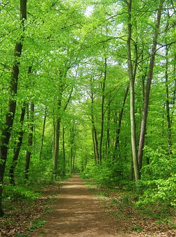 Forest, Nature, Trees, Background