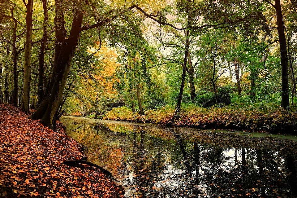Nature Leaf Deciduous Forest 183 Free Photo On Pixabay