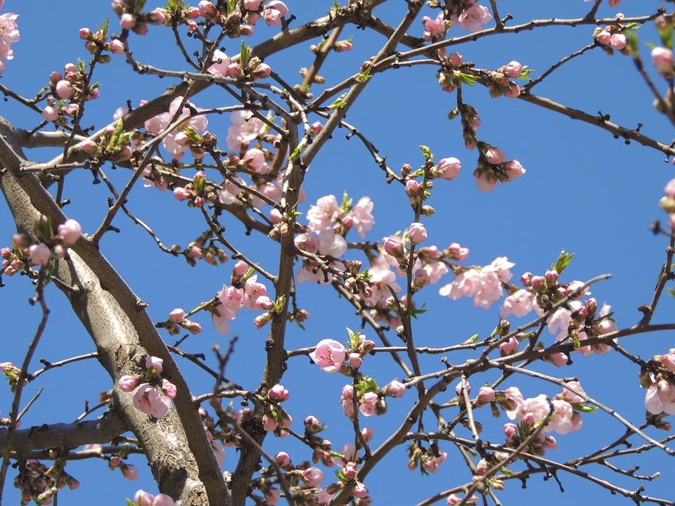Aesthetic Flowers Pink Free Photo On Pixabay