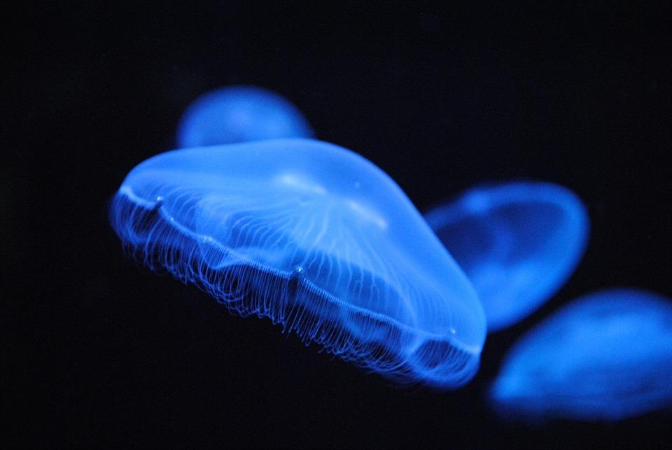 2048 медуза 5
