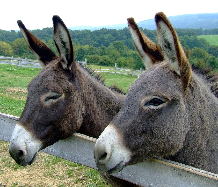 Donkeys Animals Forest · Free Photo On Pixabay