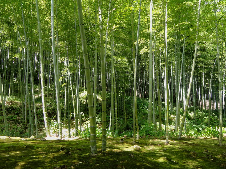 Kyoto Japan Bamboo 183 Free Photo On Pixabay