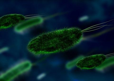 Bakterien, Virus, Organismus, Erreger