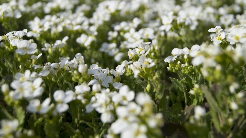 flora blomster