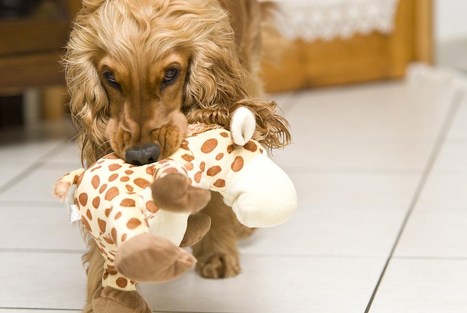 Juegos para entretener a tu perro durante la cuarentena