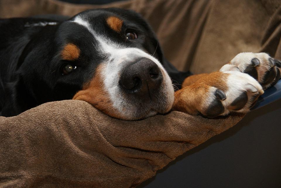 How Many Benadryl Can A Dog Have