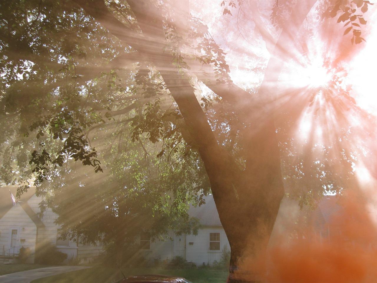 Фото с солнечными лучами утреннего света