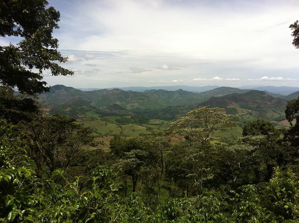 Plantation, Café, Nicaragua, Jungle, Paysage, Sauvage