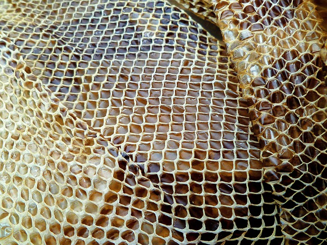 Photo Gratuite Peau De Serpent Reptile S 233 Ch 233 Es Image