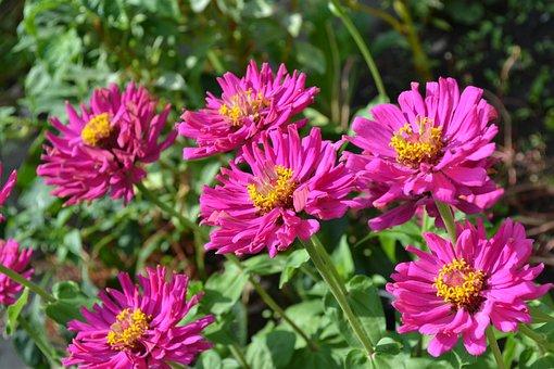 Flower, Garden, Autumn