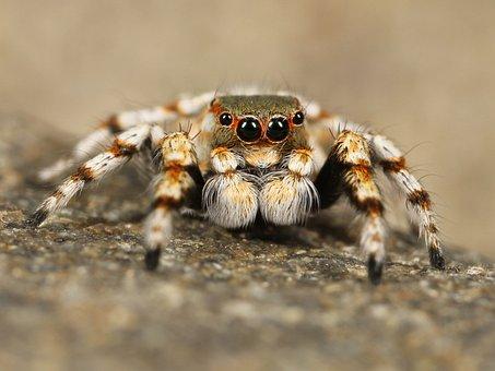300 Free Tarantula Spider Images Pixabay