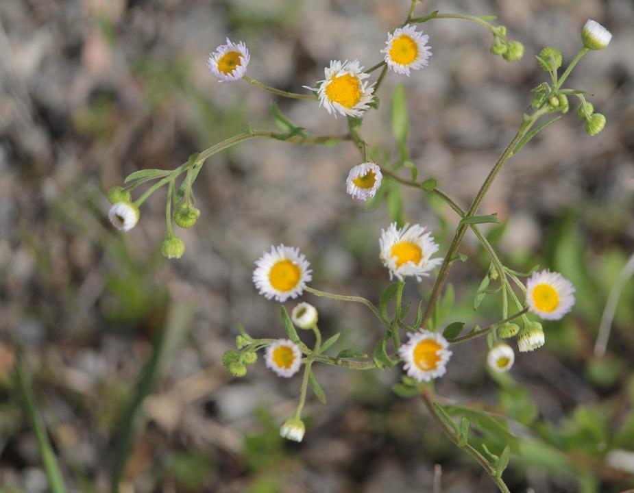 Yellow white flowers free photo on pixabay yellow white flowers weed green oklahoma nature mightylinksfo Choice Image