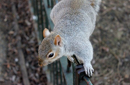 Squirrel, Squirrels, Wildlife, Animals
