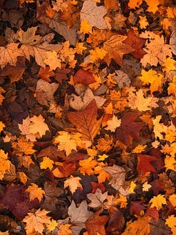 Fall Foliage Autumn Leaves October Fo