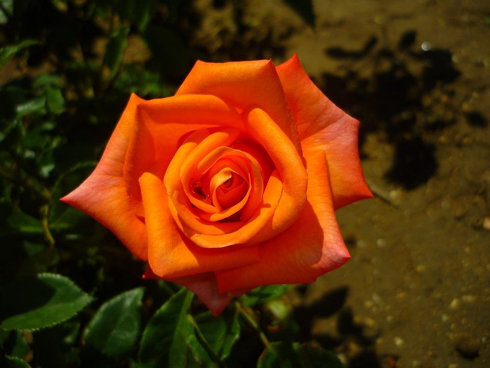 скачать Rosa торрент - фото 7