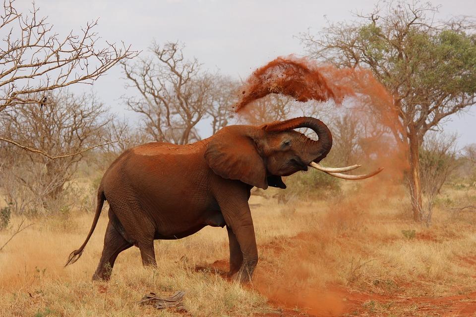 Elefante, Africa, Elefante Africano, Kenya, Tsavo