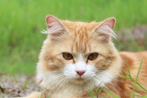Cat, Feline, Kitty, Kitten, Domestic