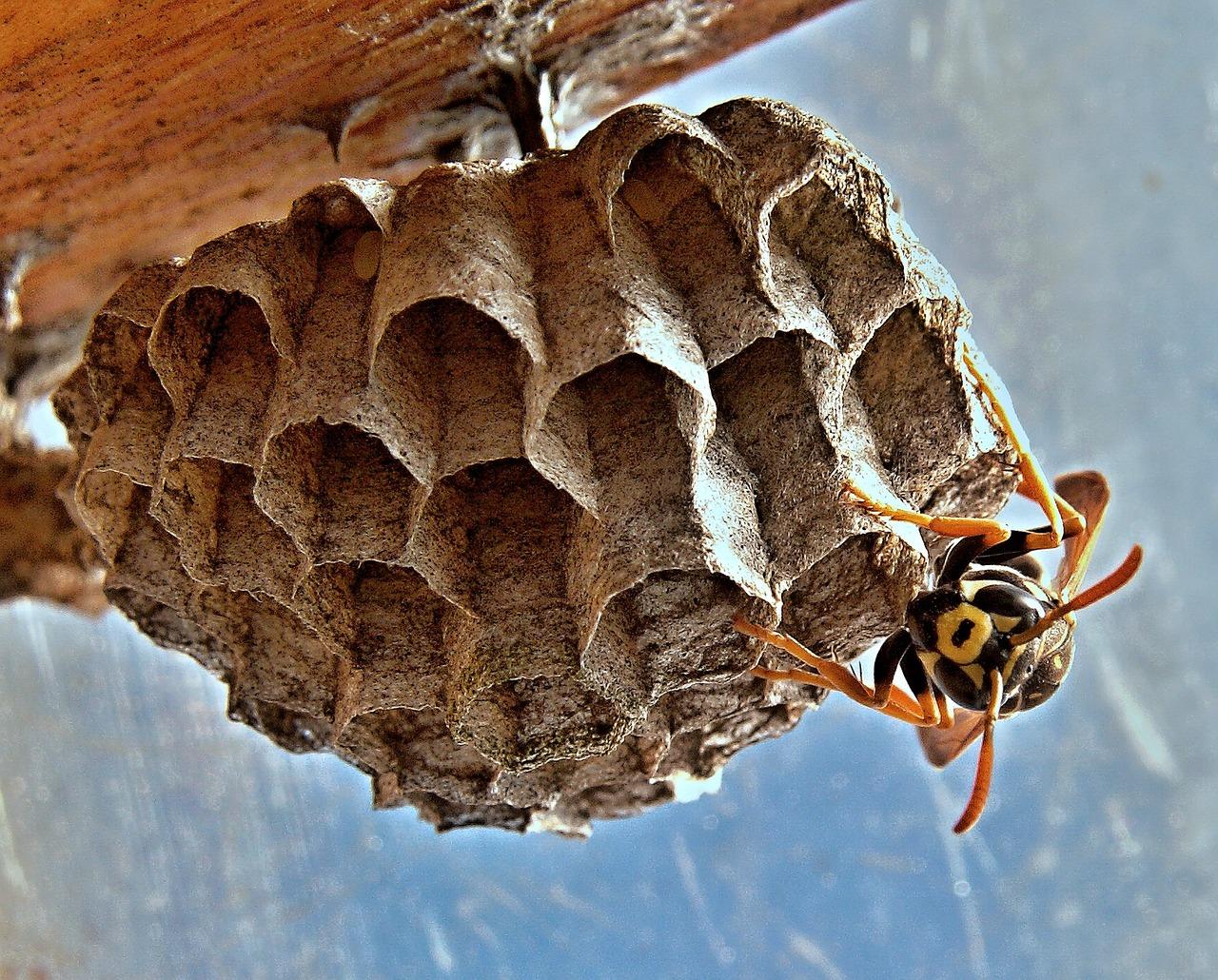 Картинка осиное гнездо для детей