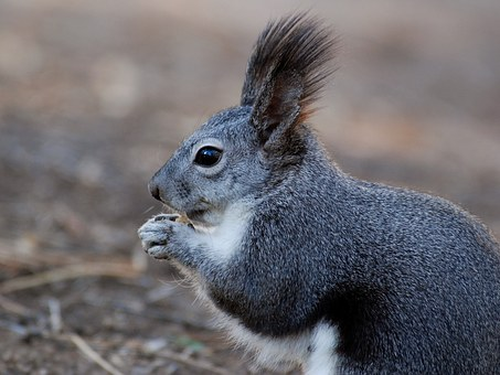 Squirrel, Animal, Close-Up, Macro