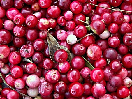 Cranberries, Black Berry, Forest Fruit