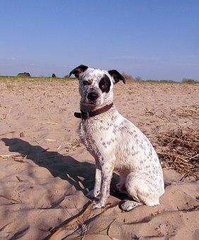 Dog, Hybrid, Male, White, Black, Spotted