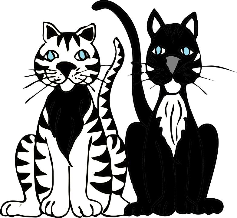obrázok čierne dievčatá mačička