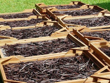 Drying, Vanilla Beans, Mauritius