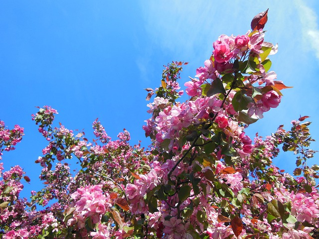 Photo gratuite cerisier japonais fleur image gratuite sur pixabay 114267 - Arbuste japonais fleur jaune ...