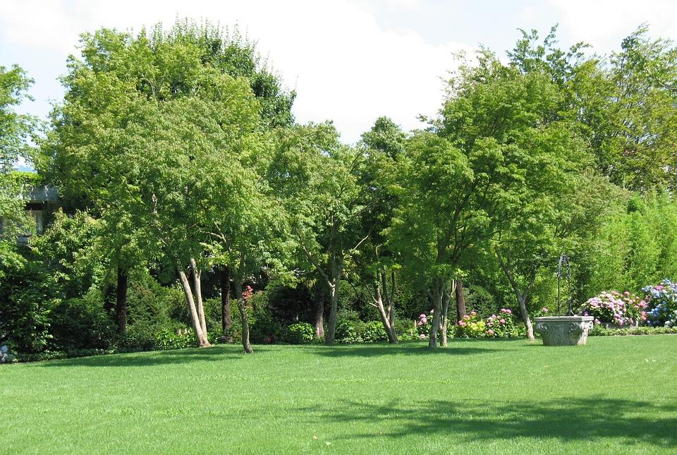Jardín Enea Paisaje árbol Planta Rapperswil