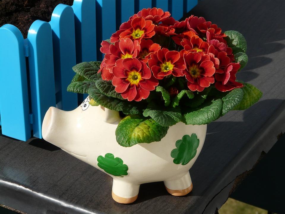 Blumen Pflanzen Balkon Kostenloses Foto Auf Pixabay