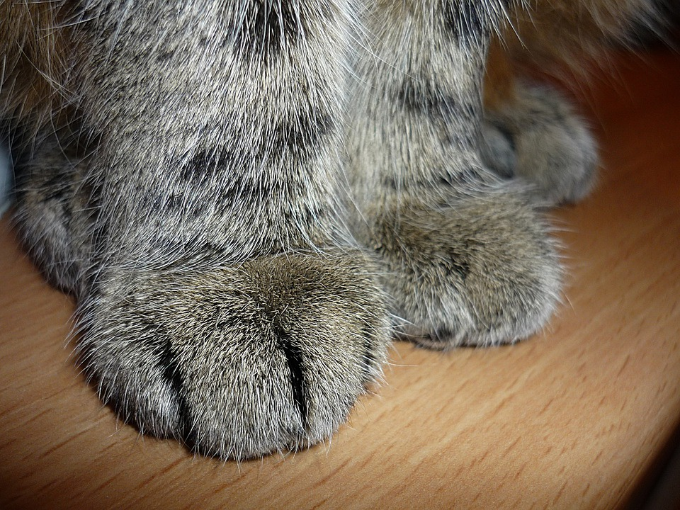 My Cat S Paws Are Turning Black