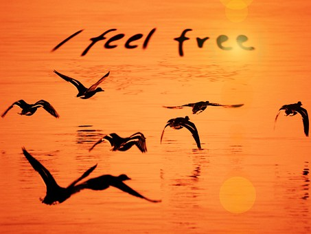 Seagull, Water, Orange, Free, Freedom