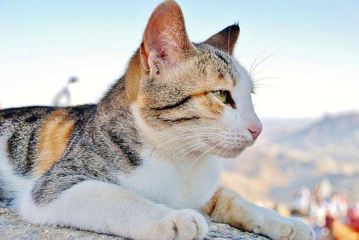 obrázky pekné mačička