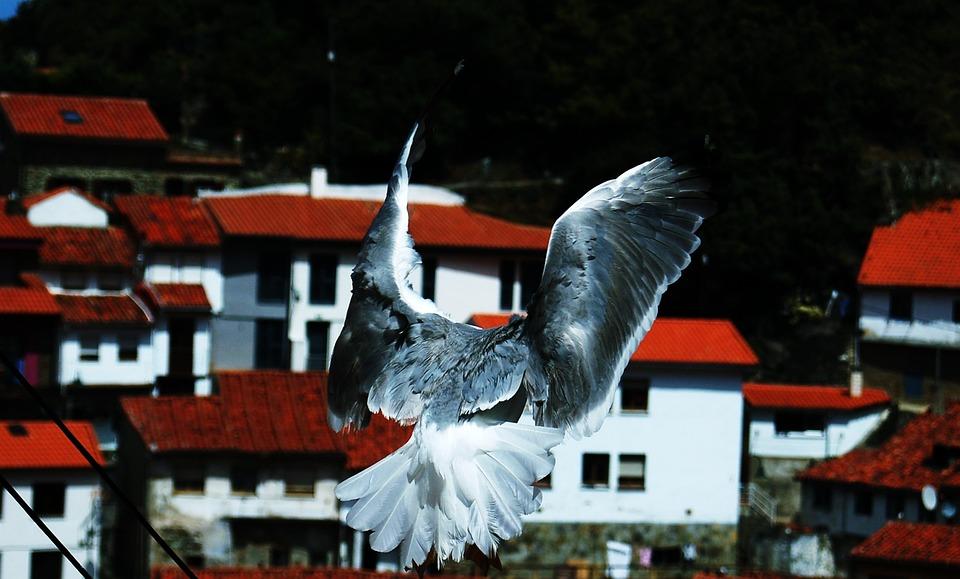 Palomas, Asturias, Alas, Aves, Paisaje, Volar