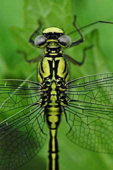 Dragonfly, Macro, Insect, Water