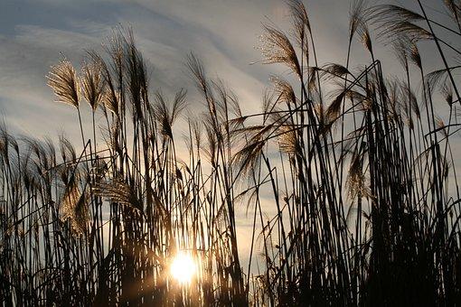 Grasses, Meadow, Sunset, Sunlight