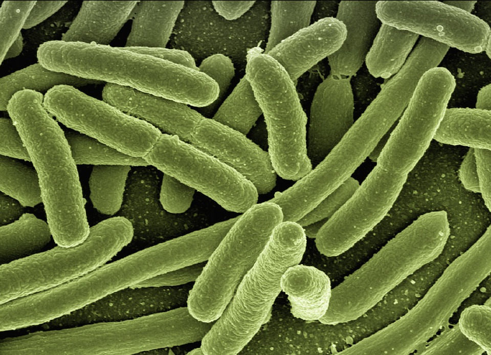 e coli disease (cnn)federal health officials reported seven additional cases of e coli illness wednesday in a deadly e coli outbreak that has now struck 15 us states the us centers for disease control and prevention said the total number of those infected has climbed to 24 nine of those people.
