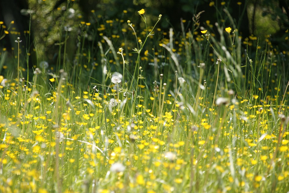 Meadow Flowers Spring Hay - Free photo on Pixabay