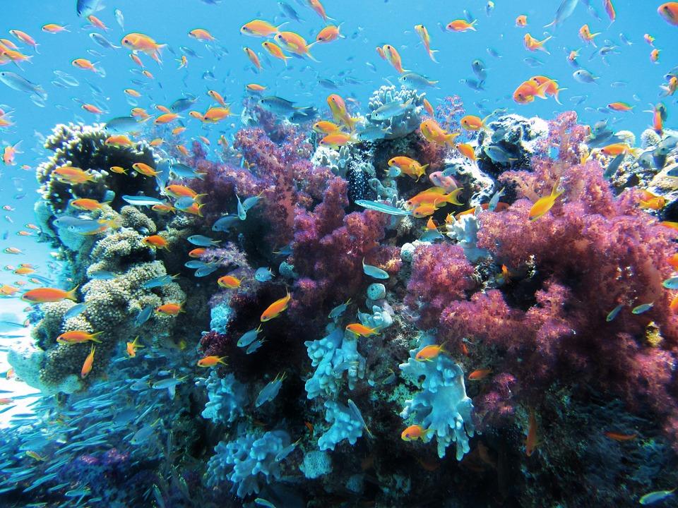 「海洋的健康探測器」珊瑚-想像一個沒珊瑚的世界