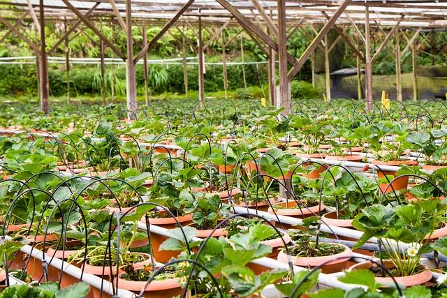 Foto gratis fragola fragole pianta di fragole for Pianta fragole