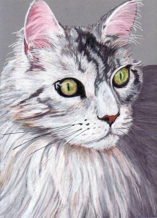 Cat Occhi Di Gatto Animale Disegno Immagini Gratis Su Pixabay