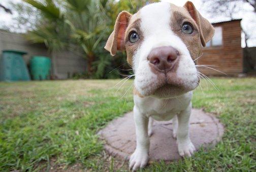 puppy 140306  340