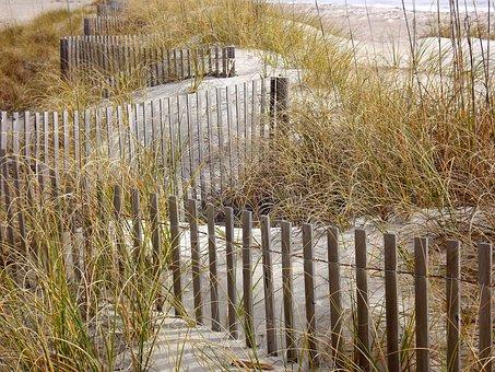 Grasses, Fence, Beach, Sand, Sand Fence