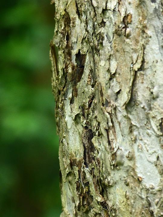 Rinde, Baum, Apfelbaum, Stamm, Obstbaum, Borke