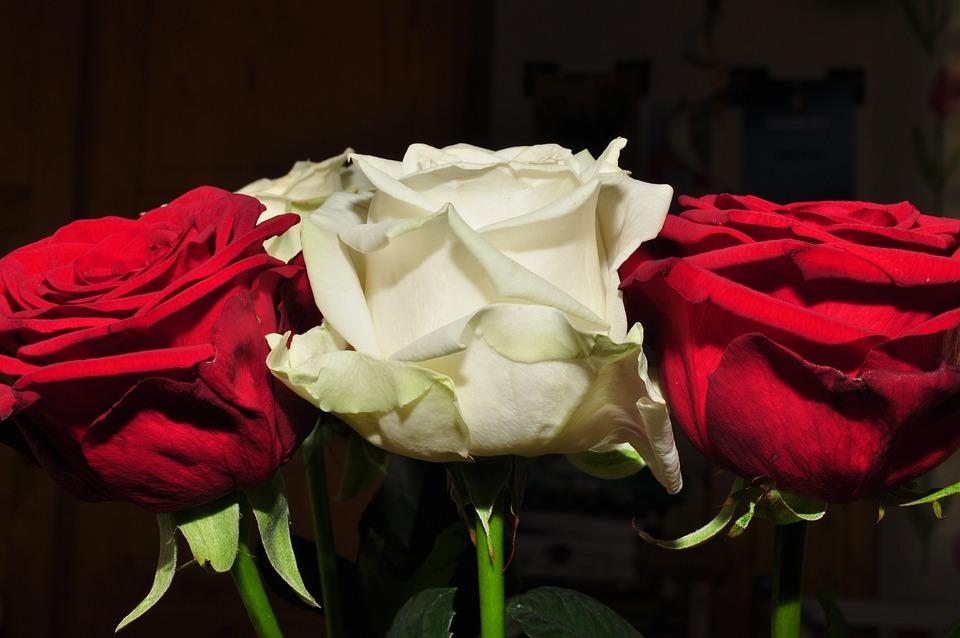 Flores Flor Roja Ros Rosa Foto Gratis En Pixabay