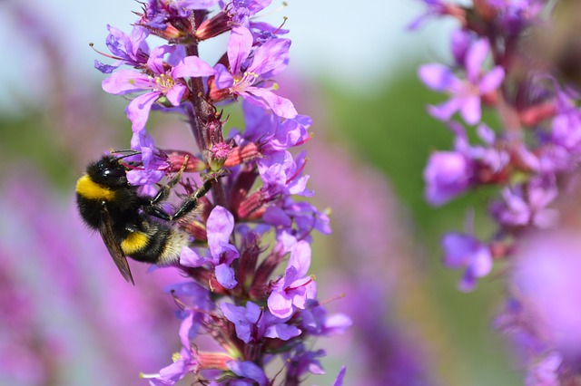 Beautiful Flowers Garden Nature