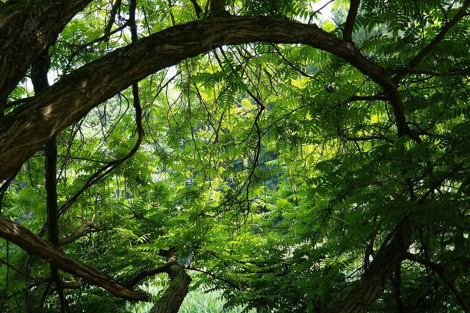 Free photo Tree  Jungle Green Branches Free Image on