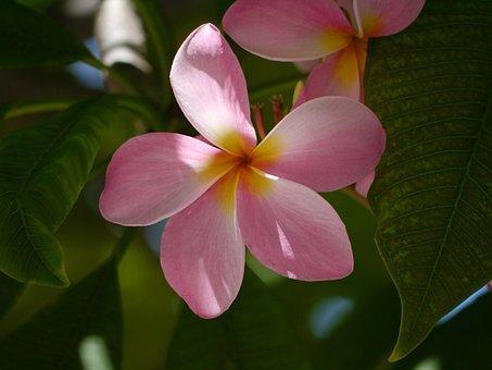Florida Blume Bilder · Pixabay · Kostenlose Bilder herunterladen