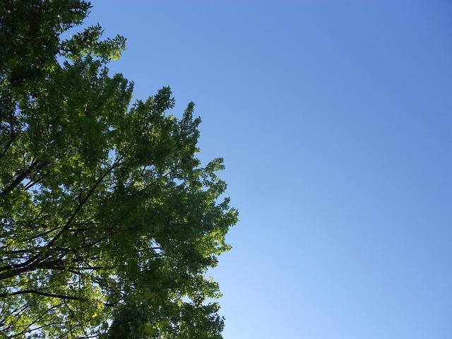 photo gratuite arbres branches vert feuilles image gratuite sur pixabay 141903 - Arbre Ciel